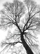 Fototapety NATURA drzewa 6557 mini