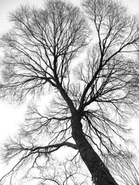 Fototapety NATURA drzewa 6557
