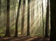 Fototapety NATURA drzewa 6558 mini