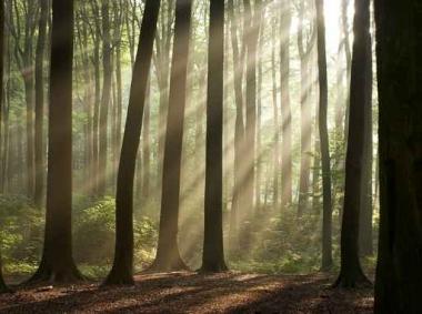 Fototapety NATURA drzewa 6558