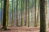 Fototapety NATURA drzewa 6559 mini