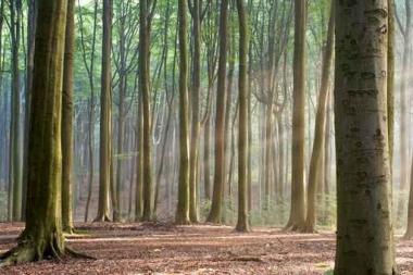 Fototapety NATURA drzewa 6559