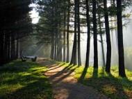 Fototapety NATURA drzewa 6560 mini