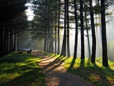 Fototapety NATURA drzewa 6560