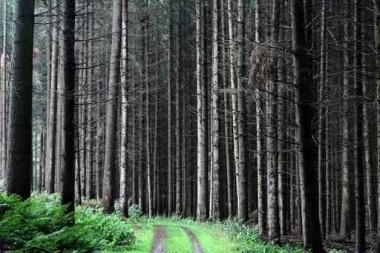 Fototapety NATURA drzewa 6561