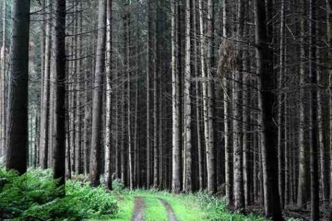 Fototapety NATURA drzewa 6561-big