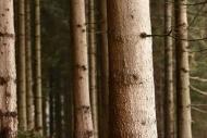 Fototapety NATURA drzewa 6562 mini