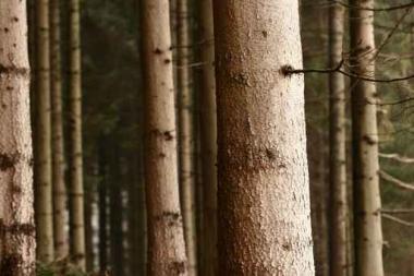 Fototapety NATURA drzewa 6562