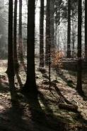 Fototapety NATURA drzewa 6563 mini