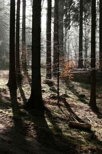 Fototapety NATURA drzewa 6563-big