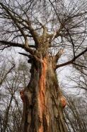 Fototapety NATURA drzewa 6565 mini