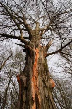 Fototapety NATURA drzewa 6565