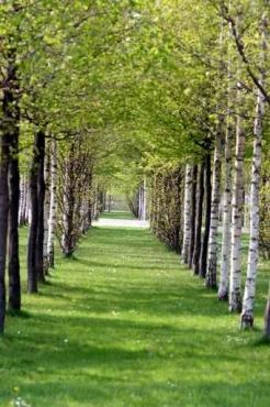Fototapety NATURA drzewa 6566
