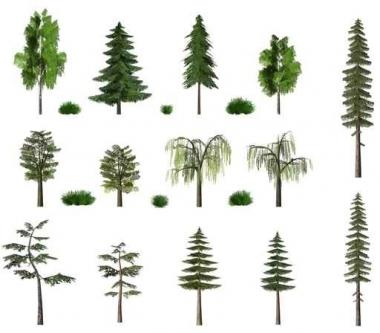 Fototapety NATURA drzewa 6567