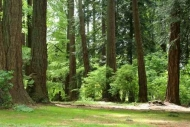 Fototapety NATURA drzewa 6568 mini