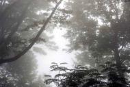 Fototapety NATURA drzewa 6570 mini