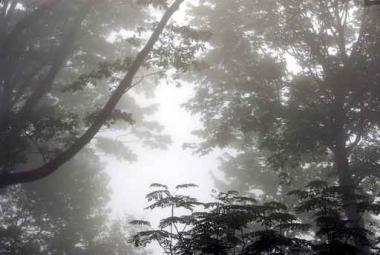 Fototapety NATURA drzewa 6570