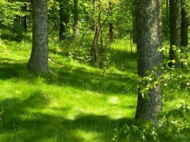 Fototapety NATURA drzewa 6571