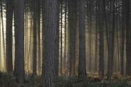 Fototapety NATURA drzewa 6572 mini