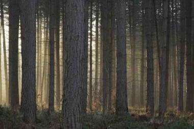Fototapety NATURA drzewa 6572