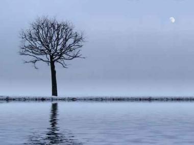 Fototapety NATURA drzewa 6573