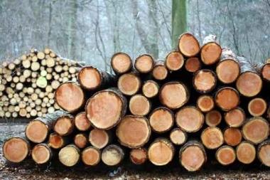 Fototapety NATURA drzewa 6574