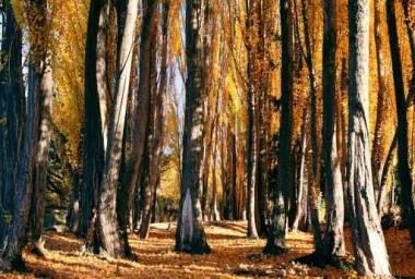 Fototapety NATURA drzewa 6575