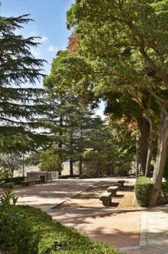 Fototapety NATURA drzewa 6576