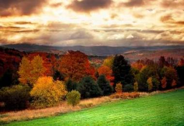 Fototapety NATURA drzewa 6577