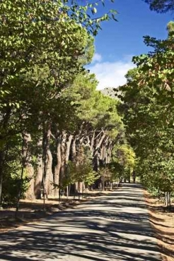 Fototapety NATURA drzewa 6578