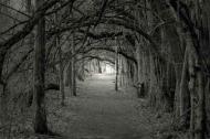 Fototapety NATURA drzewa 6579 mini