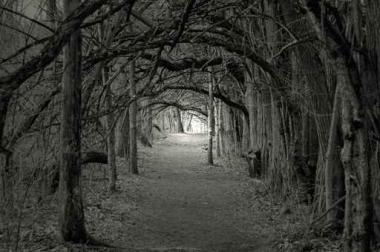 Fototapety NATURA drzewa 6579