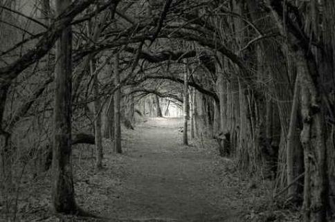 Fototapety NATURA drzewa 6579-big