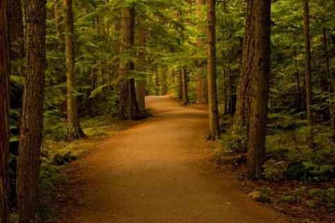 Fototapety NATURA drzewa 6580-big
