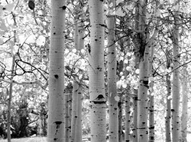 Fototapety NATURA drzewa 6581