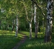 Fototapety NATURA drzewa 6582 mini