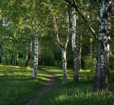 Fototapety NATURA drzewa 6582