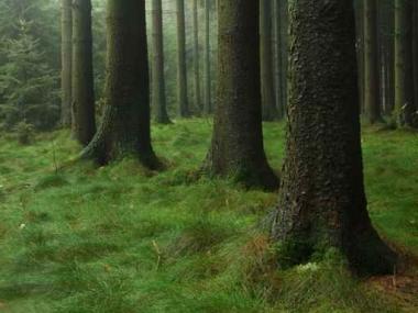 Fototapety NATURA drzewa 6584