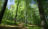 Fototapety NATURA drzewa 6586 mini