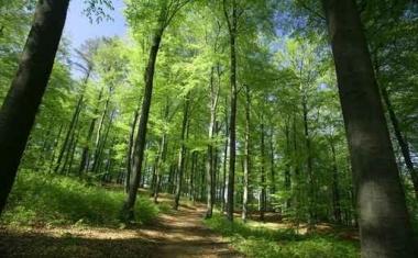 Fototapety NATURA drzewa 6586
