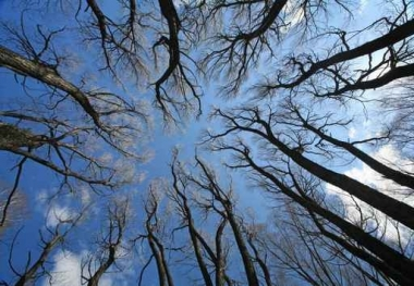 Fototapety NATURA drzewa 6587
