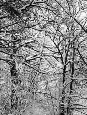 Fototapety NATURA drzewa 6588