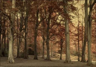 Fototapety NATURA drzewa 6589