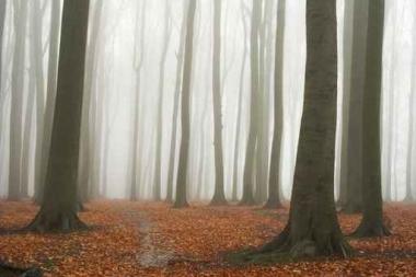 Fototapety NATURA drzewa 6590