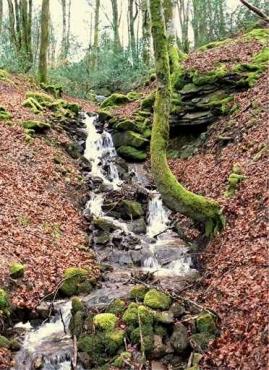 Fototapety NATURA drzewa 6591