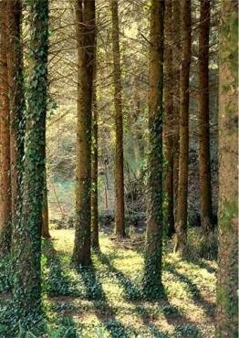 Fototapety NATURA drzewa 6592