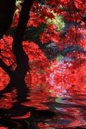 Fototapety NATURA drzewa 6593 mini