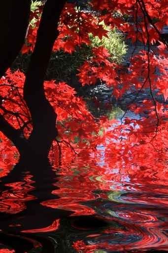 Fototapety NATURA drzewa 6593-big