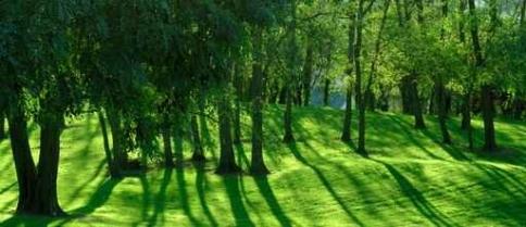 Fototapety NATURA drzewa 6597-big