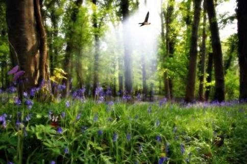 Fototapety NATURA drzewa 6601-big